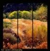 Zion's Meadow...
