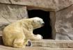 Polar Bear Prayer...