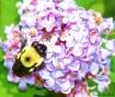 ~Bee Happy~