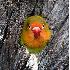 © Annie Katz PhotoID # 5964669: lovebird