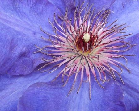 Purple Passion Fireworks