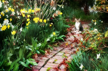 Cat on a Red Brick Path