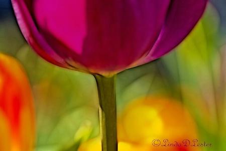 Colors in the Garden