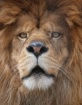 Lion Closeup Star...