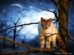 ~ Night Watcher ~