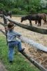 Pony Cowboy