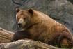 Big Bear_2
