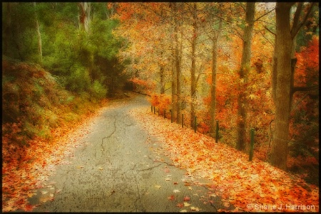 Autumn in the Cataract Gorge....