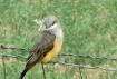 gathering nest bu...