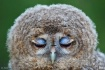 Blue eyelids... B...