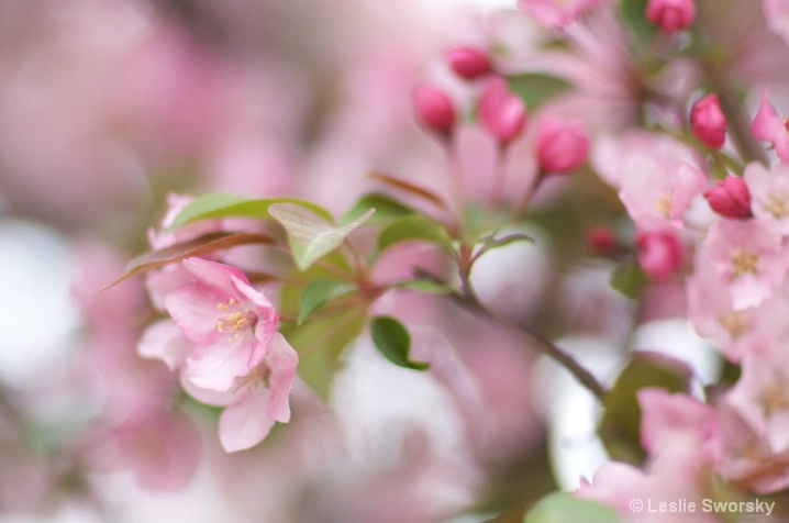 Late spring blossoms