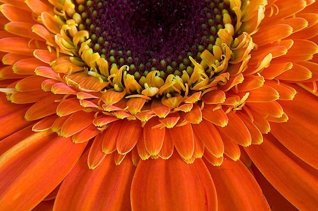 Magnificence of orange