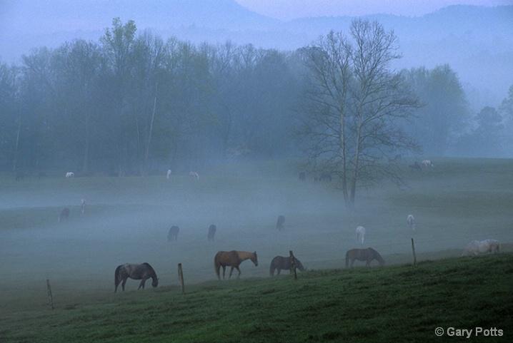 Cades' Horses - ID: 6281595 © Gary W. Potts
