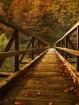 Autumnal bridge