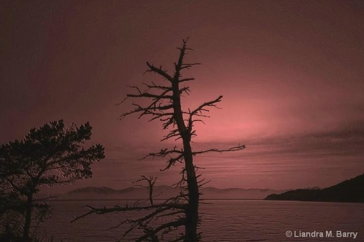 Twilight - ID: 6398637 © Liandra Barry