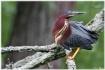 Heron....