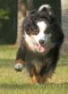 Tess at a Run