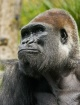 Pondering Darwin&...