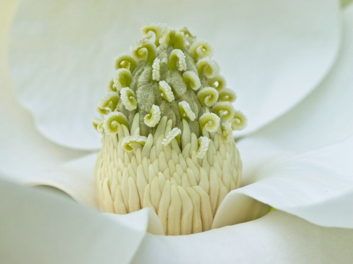 Magnolia up close and personal