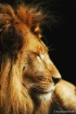 Profile of a King
