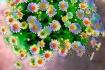 Zephir Floral