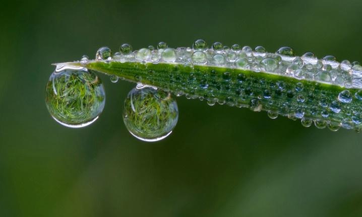Dewdrop Lenses #2