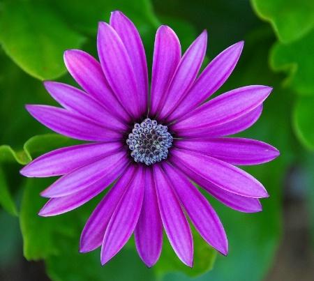 Sister's Flower