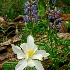 © Robert Elliott PhotoID # 6544992: Wildflowers by Cedar Breaks, UT