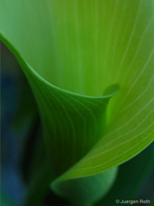 FP-002: Leaf - ID: 6554475 © Juergen Roth