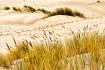 Oregon sand dunes