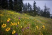 Wildflowers In Su...