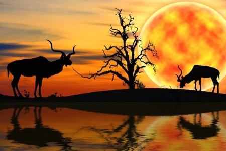 Kudu Dreams