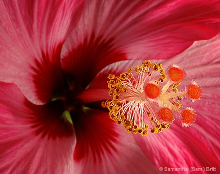 <b>Strawberry Swirl</b>
