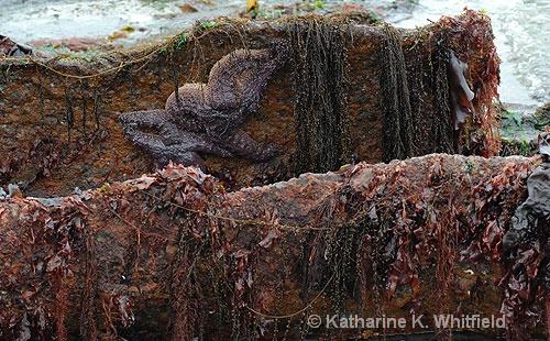 Minus 4 Tide2 - ID: 6660797 © Kathy K. Whitfield