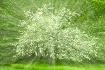 Burst of Blooms