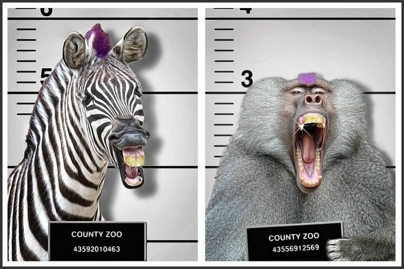 Animal Mugshots: The Purple-Top Gang