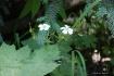 2 flowers, 1 bug