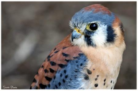 Pretty Bird.....