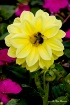 Another Bee Attac...