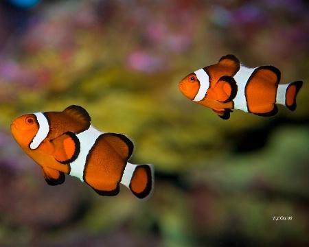 Dustins Fish
