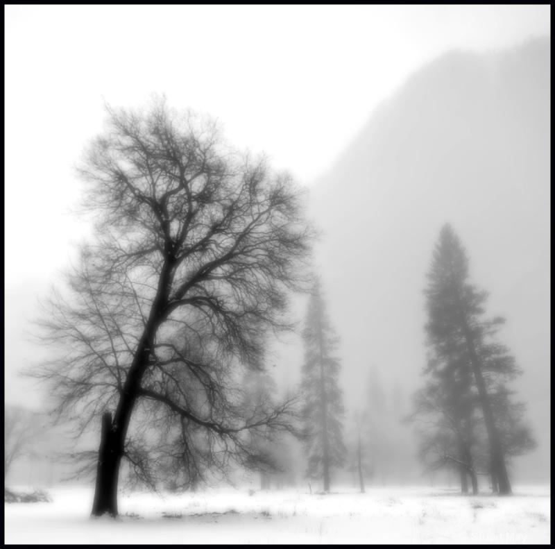 tree cathedral rocks in mist - ID: 6826427 © Stuart May