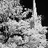 © Robert Elliott PhotoID # 6836341: Infared - Tabernacle, St. George, Ut