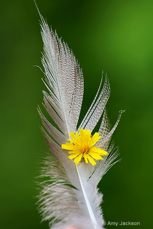 Feather & Flower