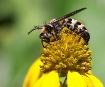 Bee Nice 2