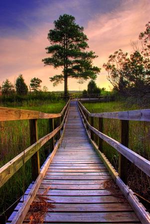 Wetland Walkway
