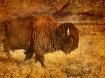 Remington Buffalo