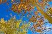 fall on oak creek...