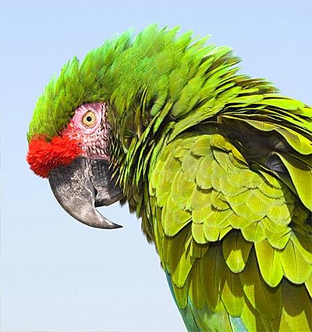 parrot - ID: 6877235 © Paul Knupp