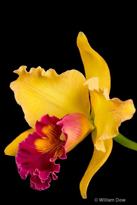 Mary Ellen Carter Dixie Hummingbird 01   - ID: 6878710 © William Dow
