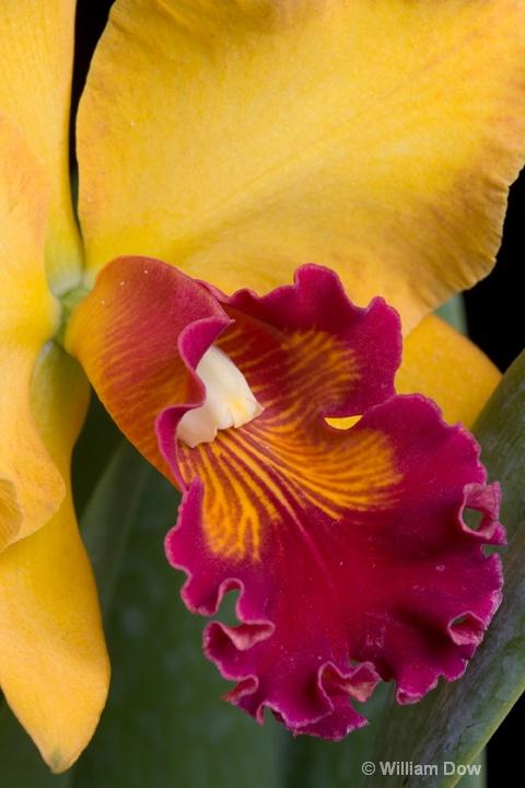 Mary Ellen Carter Dixie Hummingbird' 02  - ID: 6878712 © William Dow